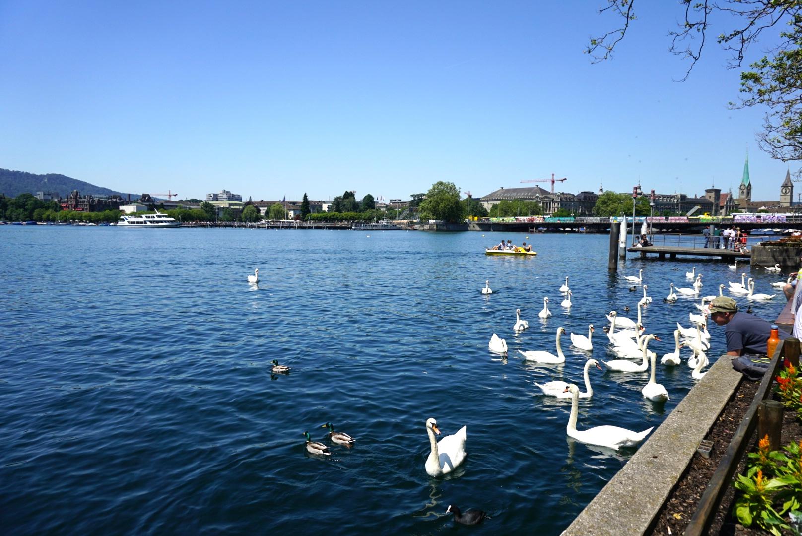 Sperm banks lake zurich